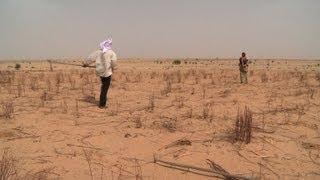 Download Niger: les banques céréalières pour lutter contre la sécheresse Video