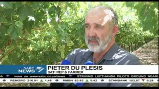 Download SA's table grape producers to harvest more in 2016 Video