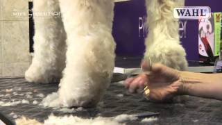 Download Grooming Guide - Labradoodle - Pro Groomer Video