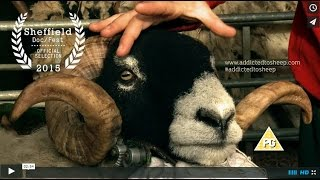 Download Addicted to Sheep Trailer Video