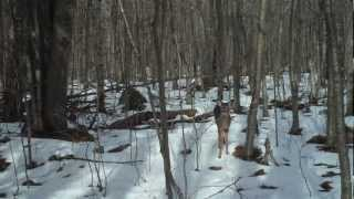 Download Trail Camera Wildlife Mysteries Video