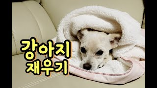 Download 강아지 재우기 Video