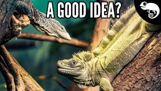 Download Can I Keep My Reptiles Together? Video