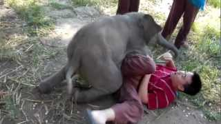 Download Baby Elephant Loves Cuddling with Arthur (Original) Video