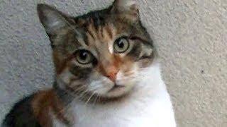Download 凄い!猫を虐めたオス猫に猫パンチをした賢い猫!猫は見てるね Video
