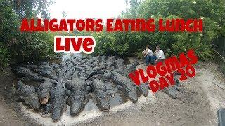 Download Alligators Eating Lunch Live!!! Vlogmas Day 20 Video