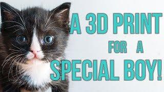 Download Special Kitten Gets a 3D Print for Megaesophagus Video