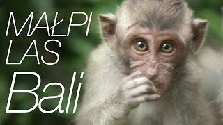 Download Niesamowity małpi las na Bali [Indonezja] Video