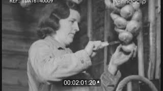 Download Winter Work In The Garden - Wartime Gardening 1943 WWII Video