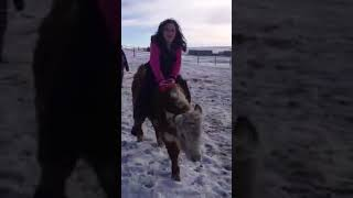 Download Calf riding little girl funny snow riding Video