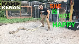 Download Meet My New ANGRY Indian Python Video
