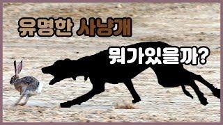 Download 세계적으로 유명한 사냥개 6종류 Video