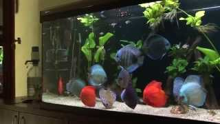 Download Discus aquarium 620 l Video