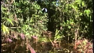 Download Amazon: The Secrets of the Golden River (part 1) Video
