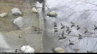 Download Breakfast On The Pond – Feb. 21, 2017 Video
