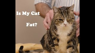 Download Is my cat fat? Mr. Pirate and Clawdia demonstrate how to tell. Video
