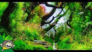 Download ADA Tokyo, Japan! Aqua Forest. Longfin Neon Tetras! Amazing Plants. Video