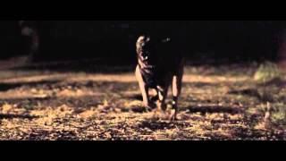 Download Warrior Dog Foundation Flagship Video SD Video