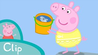 Download Peppa Pig - Rescuing Mrs. Fish (clip) Video