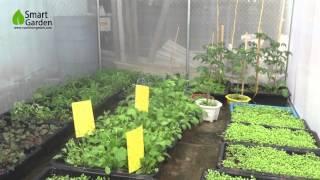 Download Mô hình nhà kính trồng rau sạch mini tại Hà Nội Video