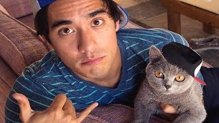 Download Best Zach King Magic Tricks with Pets - Funny Animals Vines Video Video
