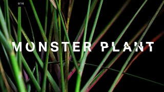 Download This monster plant is trying to take over. What if we let it? Video