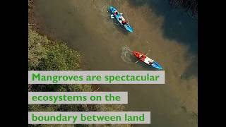 Download International Day for the Conservation of the Mangrove Ecosystem Video