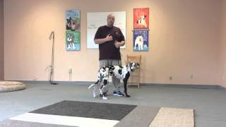 Download How to Use an Electric Collar to Train a Dog to Come When called Video