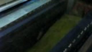 Download Krypta grobowa kaplicy Oleśnickich na Świętym Krzyżu (2007) Video