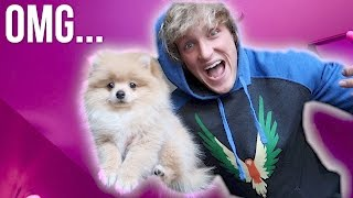 Download I JUST BOUGHT A PUPPY! **not clickbait** Video
