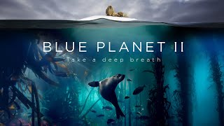 Download Blue Planet II : The Prequel Video