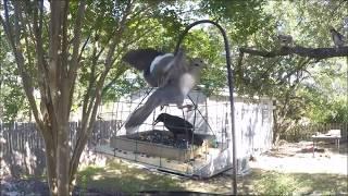 Download Pigeon & Dove Proof Bird Feeder Video