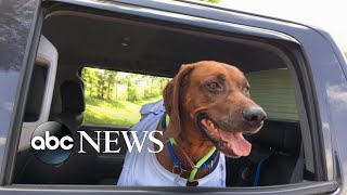Download Volunteers drive lost dog thousands of miles to return to owner Video