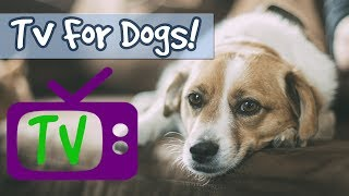 Download TV FOR DOGS! 5 Hour Playlist, Soothing Nature Footage Combined with Relaxing Music for Calming Dogs! Video