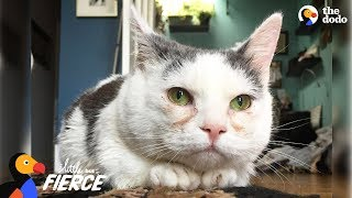 Download Cat with Short Legs Looks Like a Tiny Potato - GISELLE | The Dodo Little But Fierce Video