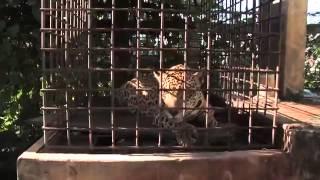 Download Tiger bay ghetto life Guyana Video