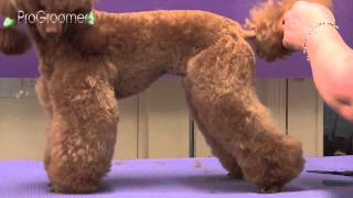 Download Miniature Poodle Lamb Trim Grooming Guide - Pro Groomer Video