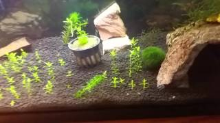 Download Keeping duckweed, salvinia minima, or any floating plant under ″control″ Video