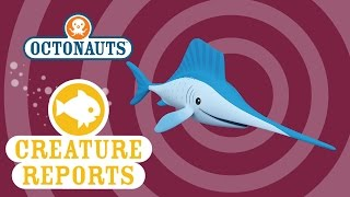 Download Octonauts: Creature Reports - SailFish Video
