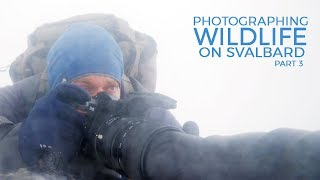 Download Photographing WILDLIFE on SVALBARD part 3 - Hidden in the Whiteout   with Thomas Heaton Video