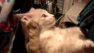 Download Feral kitten rescue June 14th UPDATE - VERY VERY SWEET!!! Video