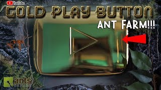 Download Turning My Youtube Gold Play Button Into an Ant Farm Video