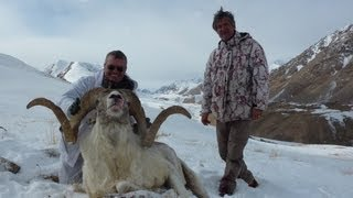 Download Tian Shan Marcopolo hunting (Chasse). Looking for the great one. By Seladang Video