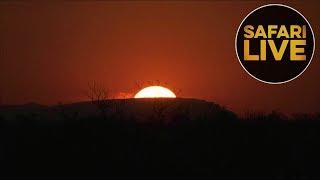Download safariLIVES: Episode 13 Video
