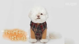 Download 한쪽 눈으로 제가 담은 세상은요. ㅣThe World This Dog Could See Through His One Eye.. Video