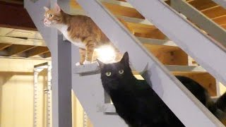 Download Cats Don't Like Closed Doors! Video