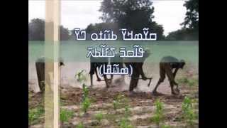 Download Sidiki Toure & Lasso Diabate (Douwa) Video