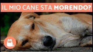 Download Come capire che il cane sta per morire – 5 SINTOMI evidenti Video