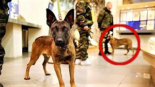 Download Russia is CLONING MEGA Military Dogs Video