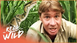 Download The Third Deadliest Snake In The World! | With Steve Irwin | Wild Things Shorts Video